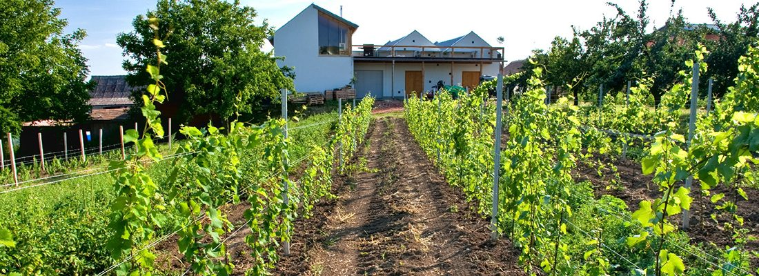 Czech these out… we take a look at 3 Czech wineries and the rather lovely wines they produce